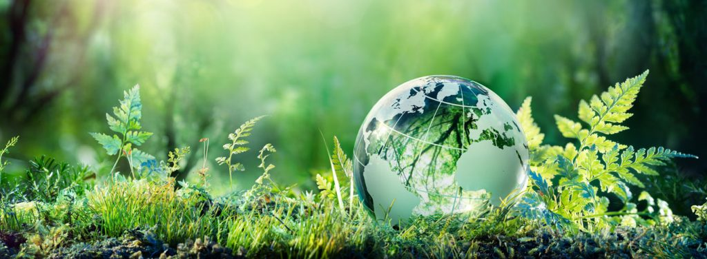 Concept of environmentally friendly. Glass globe earth sitting on moss and leaves.