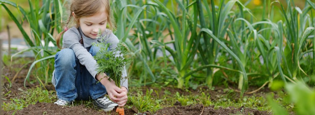 Young girl pulling carrot out of ground in vegetable garden.